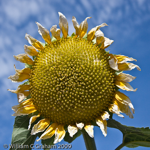 The sunflower essay questions